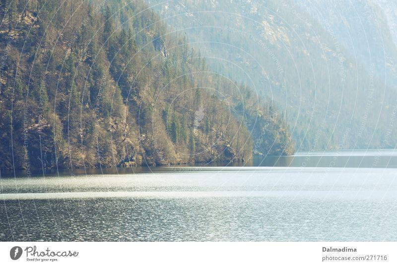 Königssee Natur Wasser Ferien & Urlaub & Reisen Baum Einsamkeit Wald Umwelt Landschaft Berge u. Gebirge Gras Frühling Freiheit See wandern Ausflug Urelemente
