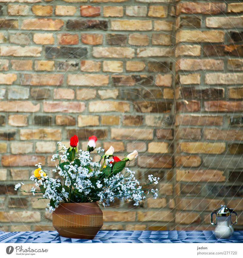 AST 5 | mauerblümchen mit zucker Pflanze Blume Erholung Wand Stil Mauer Stein Design elegant Glas genießen Ausflug Lebensfreude Kaffee Gelassenheit Blumenstrauß