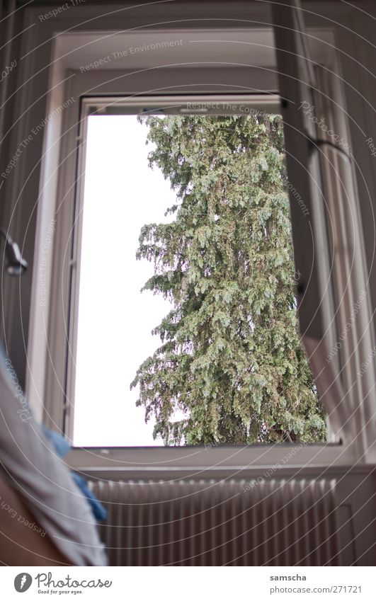 sieh mal da draussen... Natur Baum Pflanze Einsamkeit Erholung Umwelt Fenster Tod oben Gebäude träumen Wohnung Angst sitzen schlafen Idylle