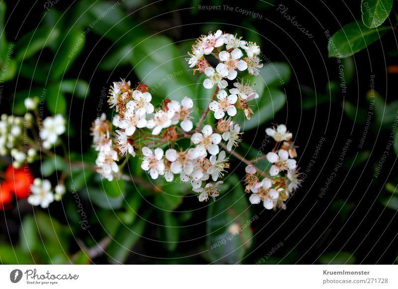 Lil Umwelt Natur Pflanze Blume Blüte Garten ästhetisch schön natürlich stark Wärme weich Farbfoto Nahaufnahme Detailaufnahme Makroaufnahme Menschenleer Tag