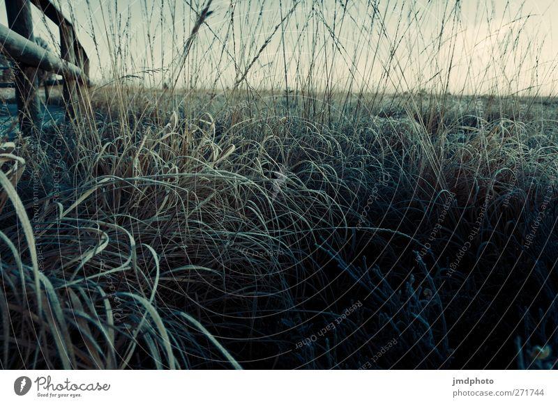 Feld ruhig Freiheit Umwelt Natur Landschaft Tier Sonnenaufgang Sonnenuntergang Pflanze Gras Nutzpflanze Wiese frisch natürlich Gelassenheit nachhaltig