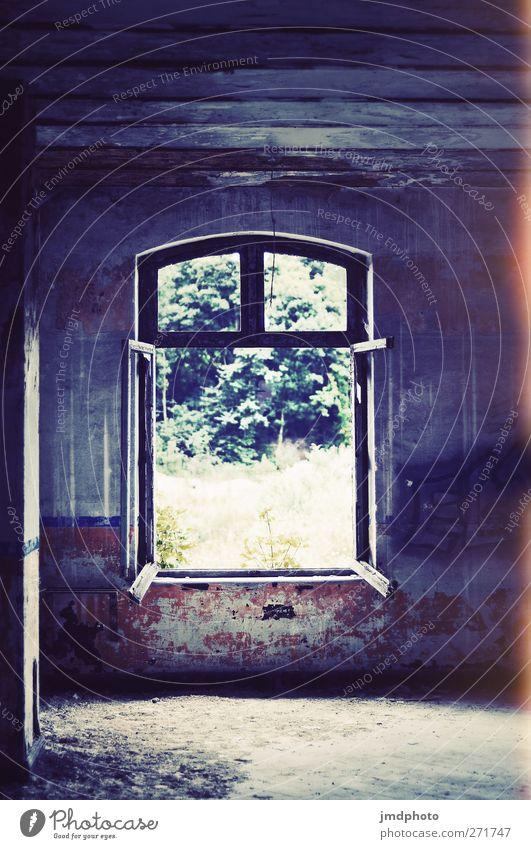 Fenster alt Stadt Pflanze Sonne Sommer Einsamkeit Haus Garten Traurigkeit Wohnung dreckig Häusliches Leben Vergänglichkeit Trauer Umzug (Wohnungswechsel)