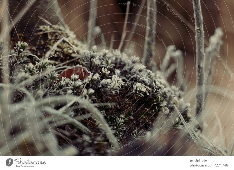 morgentau Natur Baum Pflanze Tier Winter ruhig Umwelt Landschaft kalt Gras Eis Wetter natürlich Urelemente Frost Sträucher