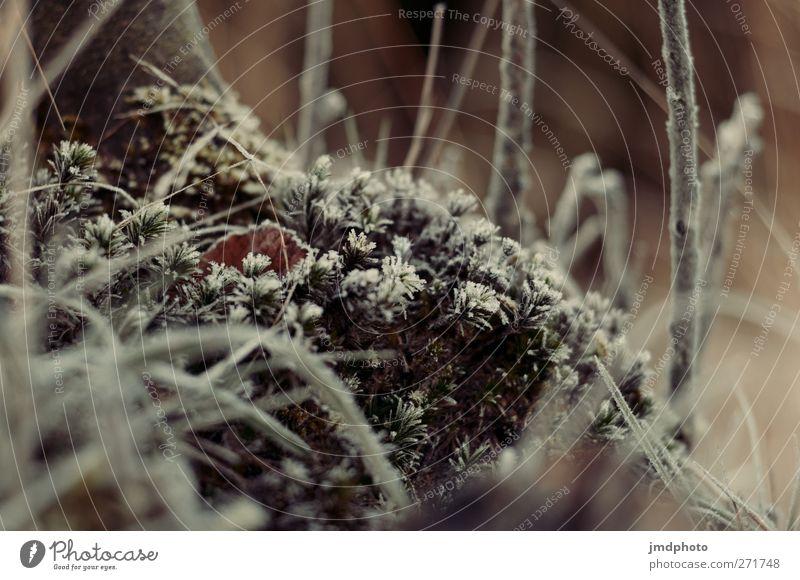 morgentau Umwelt Natur Landschaft Pflanze Tier Urelemente Wetter Eis Frost Baum Sträucher Moos Grünpflanze frieren kalt natürlich Vorfreude ruhig Tau