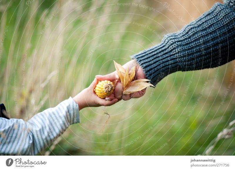 geben und nehmen. Mensch Frau Kind Natur grün Freude Erwachsene Herbst natürlich Zusammensein orange Freizeit & Hobby Kraft blond Fröhlichkeit ästhetisch