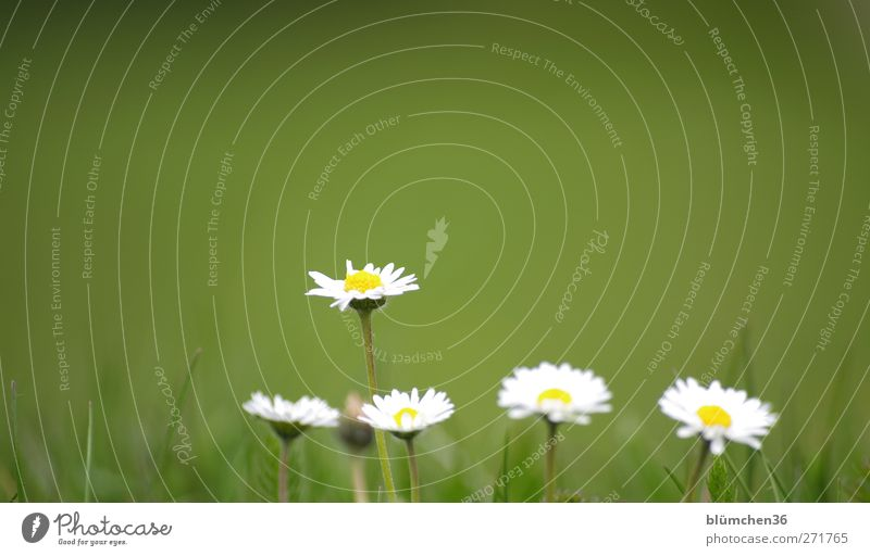 Einer tanzt doch immer aus der Reihe, oder? Natur weiß grün schön Pflanze Sommer Blume Freude gelb Frühling klein Blüte natürlich Wachstum ästhetisch