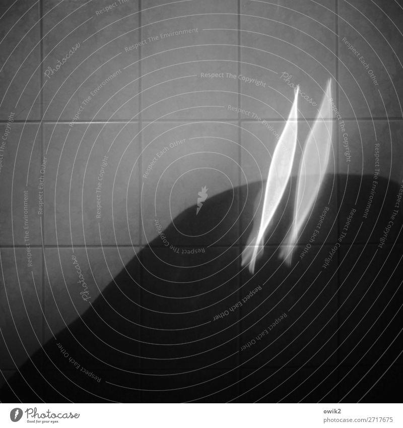 Fliegende Fische Innenarchitektur Bad Wand Fliesen u. Kacheln wasserdicht leuchten 2 paarweise doppelt gemoppelt Reflexion & Spiegelung Neugier