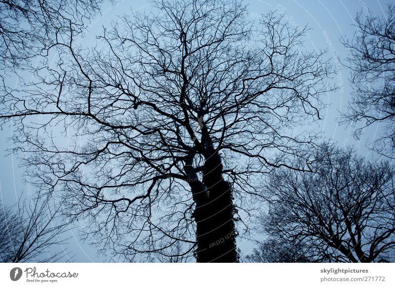 Himmel Natur Baum Pflanze Winter schwarz Wald dunkel kalt Stimmung gruselig unverhüllt