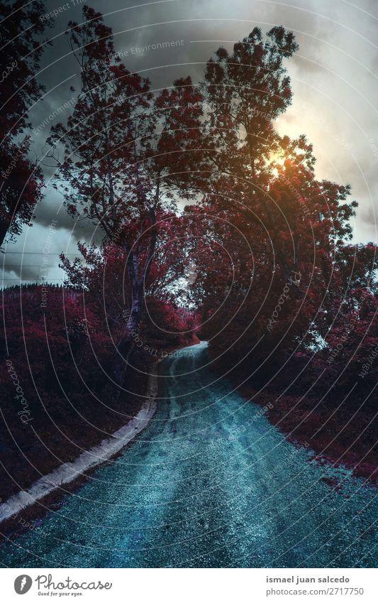 Ferien & Urlaub & Reisen Natur Farbe Landschaft rot Sonne Baum Erholung Blatt ruhig Wald Berge u. Gebirge Straße Wege & Pfade Platz Spanien