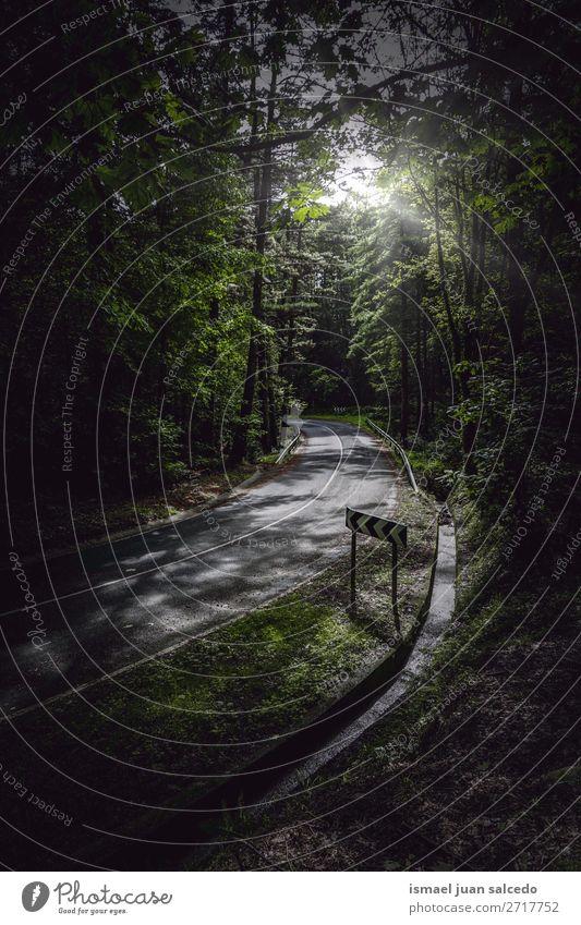 Ferien & Urlaub & Reisen Natur Farbe grün Landschaft Sonne Baum Erholung Blatt ruhig Wald Berge u. Gebirge Straße Wege & Pfade Platz Spanien