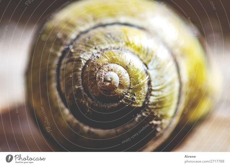 Wohnidee Schnecke Schneckenhaus Spirale Kreis Windung Mittelpunkt bauen Häusliches Leben rund braun gelb fleißig Ordnungsliebe Einsamkeit kreisen zentral