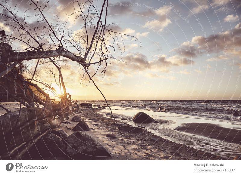 Schöner Strand mit einem umgestürzten Baum bei Sonnenuntergang. Erholung Ferien & Urlaub & Reisen Tourismus Ausflug Abenteuer Ferne Freiheit Camping Meer Natur