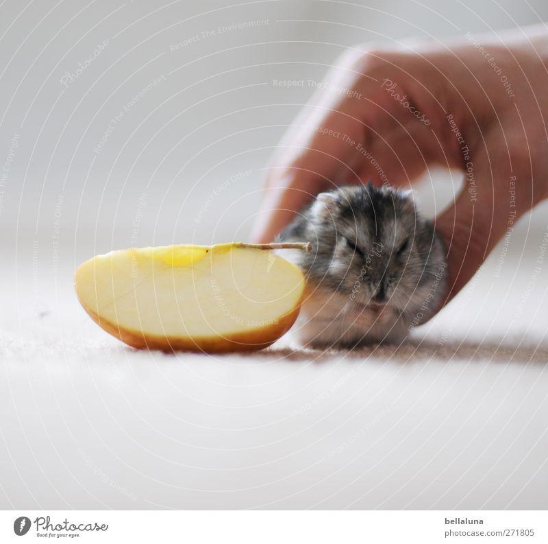 Karli | Achtung, Kamera &... Mensch Hand Tier Erwachsene Leben klein sitzen Apfel Fell Tiergesicht Fressen Haustier Pfote füttern Frucht Morgen