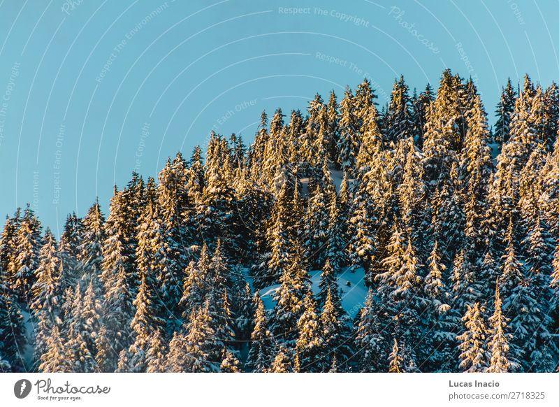 Grouse Mountain in North Vancouver, BC, Kanada Winter Schnee Berge u. Gebirge Umwelt Natur Baum Blatt Hügel Abenteuer amerika Amerikaner British Columbia