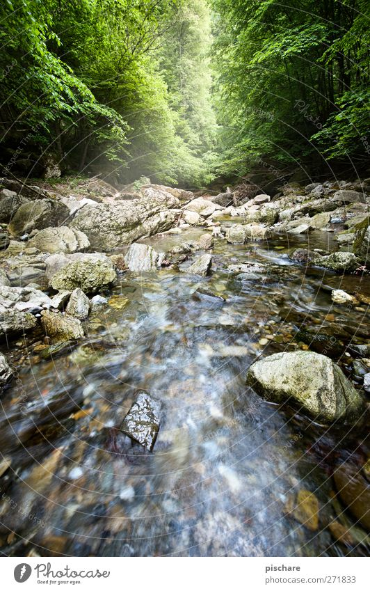 Raabklamm Natur Wasser Wald Landschaft Felsen Fluss Bach