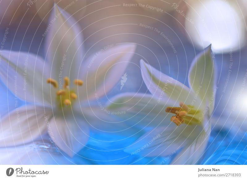Sanftes romantisches künstlerisches Bild, Valentinstag, Liebe, Jubiläum. Lifestyle Reichtum elegant Stil Design Freude schön Kosmetik Behandlung Wellness Leben