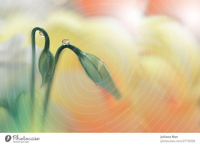 Schöne Natur Makrofotografie.Web Banner für Design.Art. Lifestyle elegant Stil Freude schön Kunst Kunstwerk Umwelt Wassertropfen Blume Dekoration & Verzierung