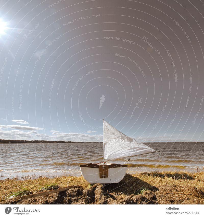 in see stechen Freizeit & Hobby Umwelt Natur Landschaft Tier Erde Luft Wasser Himmel Wolkenloser Himmel Horizont Sonne Sonnenlicht Frühling Sommer Klima