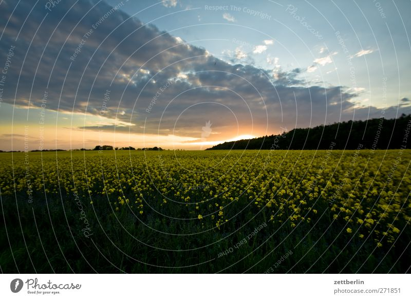 Alt Reddewitz Ferne Sommer Sonne Landwirtschaft Forstwirtschaft Himmel Wolken Sonnenaufgang Sonnenuntergang Sonnenlicht Nutzpflanze Feld Wald Romantik