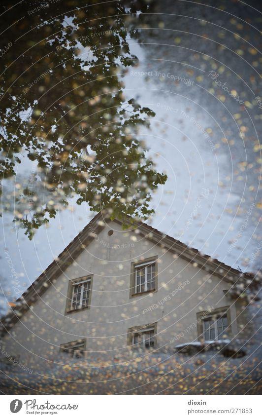 Haus im See Wetter schlechtes Wetter Regen Baum Blatt Menschenleer Gebäude Architektur Mauer Wand Fassade Fenster Dach nass Stadt Pfütze Farbfoto Außenaufnahme