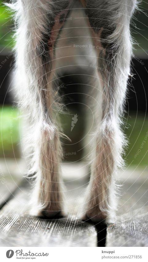 Underdog Hund weiß grün Sonne Sommer Tier schwarz feminin Herbst Holz grau Tierjunges braun wild warten elegant