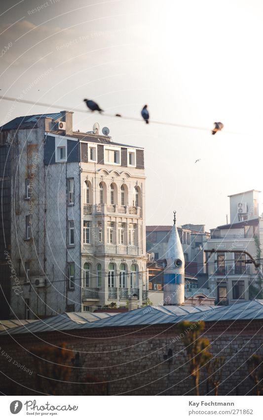 Istanbul #1 Ferien & Urlaub & Reisen Stadt Sommer Haus Erholung Ferne Fenster Architektur Freiheit Religion & Glaube Gebäude Fassade Tourismus Hochhaus Kabel