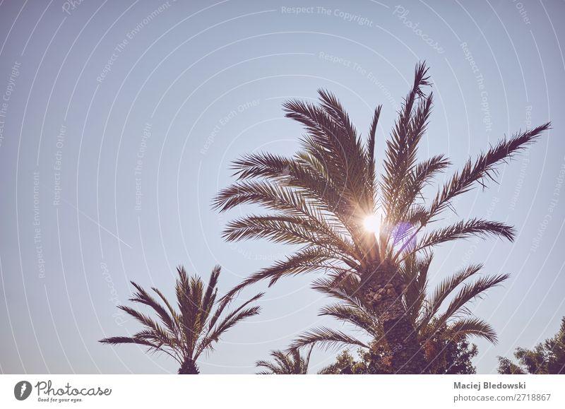 Blick auf Palmen bei Sonnenuntergang. Ferien & Urlaub & Reisen Tourismus Ausflug Abenteuer Sommer Sommerurlaub Insel Tapete Natur Pflanze Wolkenloser Himmel