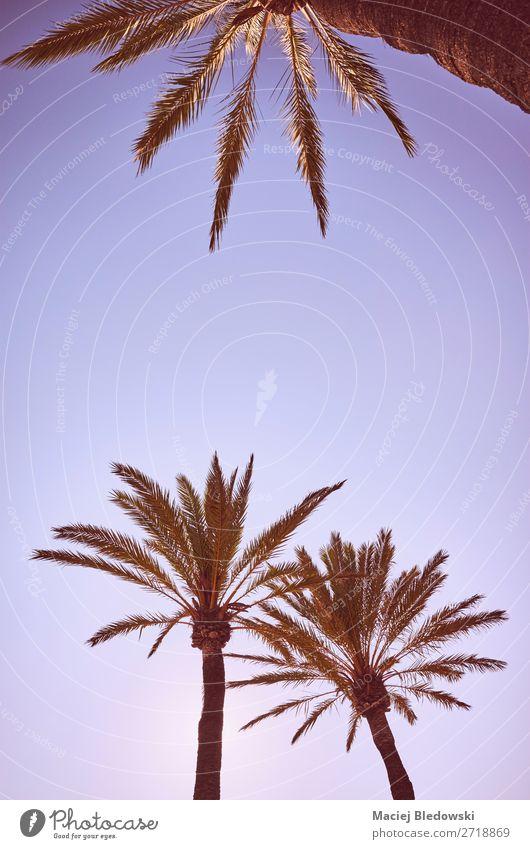 Blick auf Palmen bei Sonnenuntergang. Lifestyle Ferien & Urlaub & Reisen Ausflug Freiheit Sommer Sommerurlaub Sonnenbad Strand Insel Tapete Natur Himmel