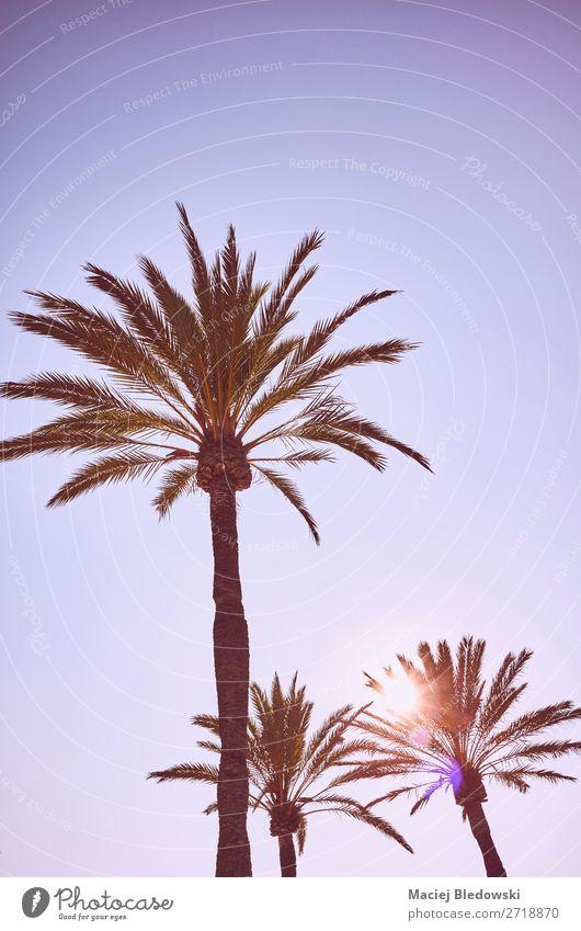 Blick auf Palmen bei Sonnenuntergang. Ferien & Urlaub & Reisen Expedition Sommer Sommerurlaub Sonnenbad Strand Insel Tapete Natur Himmel Wolkenloser Himmel Baum