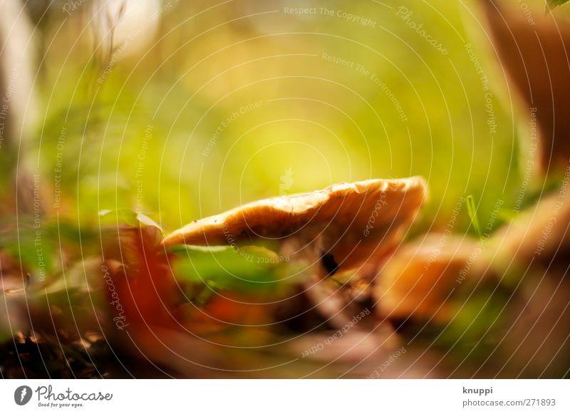 wonderland Umwelt Natur Pflanze Tier Erde Sonne Sonnenaufgang Sonnenuntergang Sonnenlicht Sommer Schönes Wetter Gras Sträucher Moos Blatt Grünpflanze