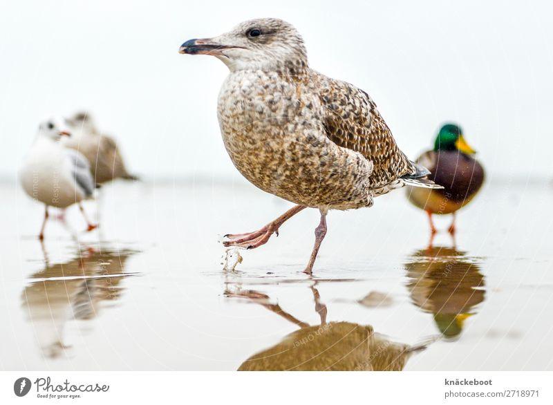 möwe im wasser Tier Wasser Wassertropfen Meer Wildtier Vogel Krallen Möwe 4 Tiergruppe Zufriedenheit Farbfoto Außenaufnahme Tag Schwache Tiefenschärfe