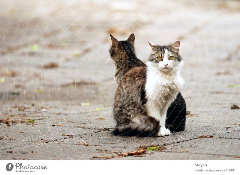 Katze schön Tier dunkel Glück Gesundheit Zusammensein sitzen Wildtier Tierpaar frei authentisch Fröhlichkeit Coolness Freundlichkeit Haustier