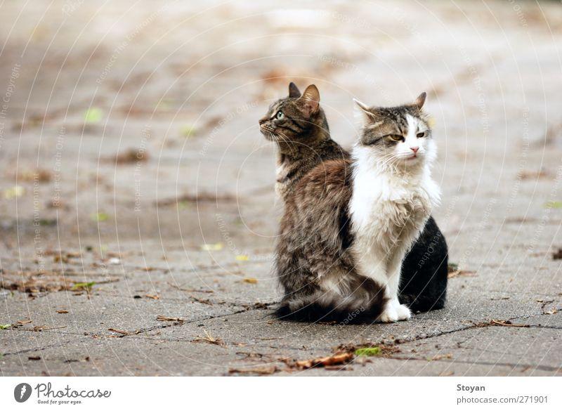 Straßenkatzen II Tier Haustier Wildtier Katze 2 Tierpaar Tierfamilie Vertrauen Sicherheit Schutz Liebe Güte Hoffnung Überraschung träumen Stolz Freiheit