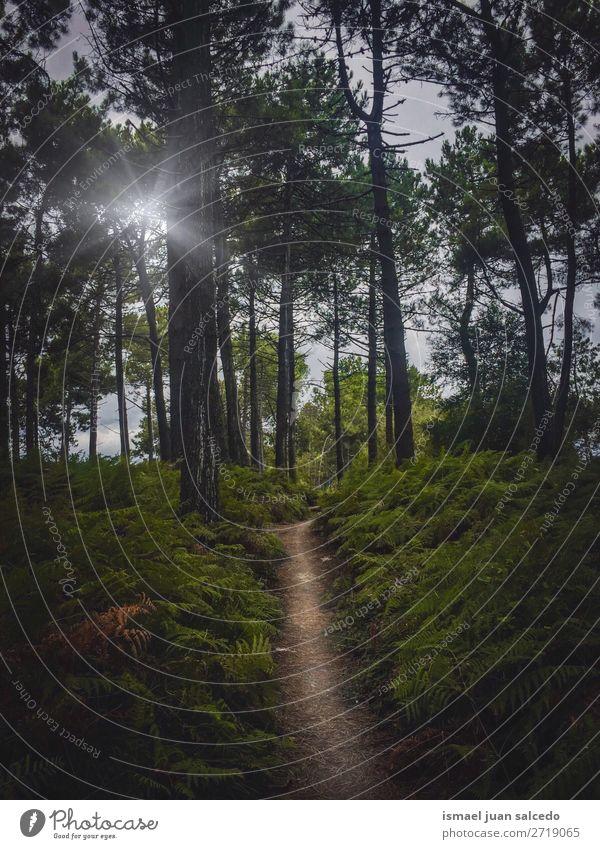 Ferien & Urlaub & Reisen Natur Farbe Landschaft Sonne Baum Erholung ruhig Wald Berge u. Gebirge Herbst Platz Spanien Gelassenheit Phantasie Ausflugsziel