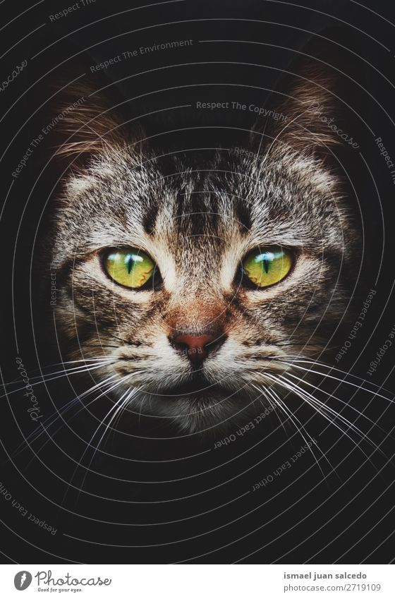 schönes Kätzchen Katzenportrait in der Natur Haustier Katzenbaby heimisch Backenbart Porträt Tier Kopf Auge Ohren Behaarung Hintergrund Tapete niedlich