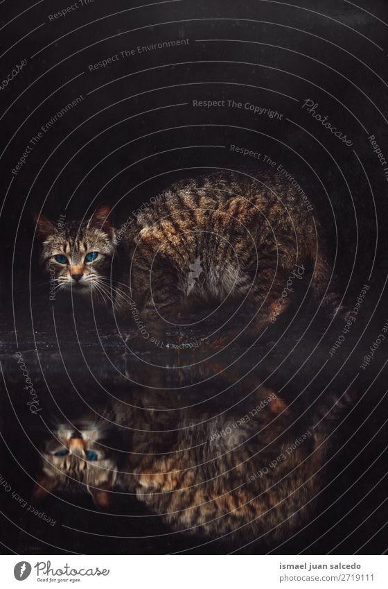 braun Kätzchen Katze Portrait Haustier Katzenbaby heimisch Backenbart Porträt Tier Kopf Auge Ohren Behaarung Hintergrund Natur niedlich Beautyfotografie elegant