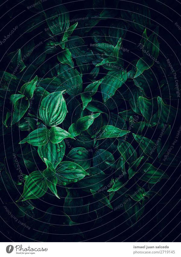 schöne grüne Pflanze Blätter Textur im Garten Blatt geblümt Natur Dekoration & Verzierung Ornament abstrakt Konsistenz frisch Außenaufnahme Hintergrund Tapete