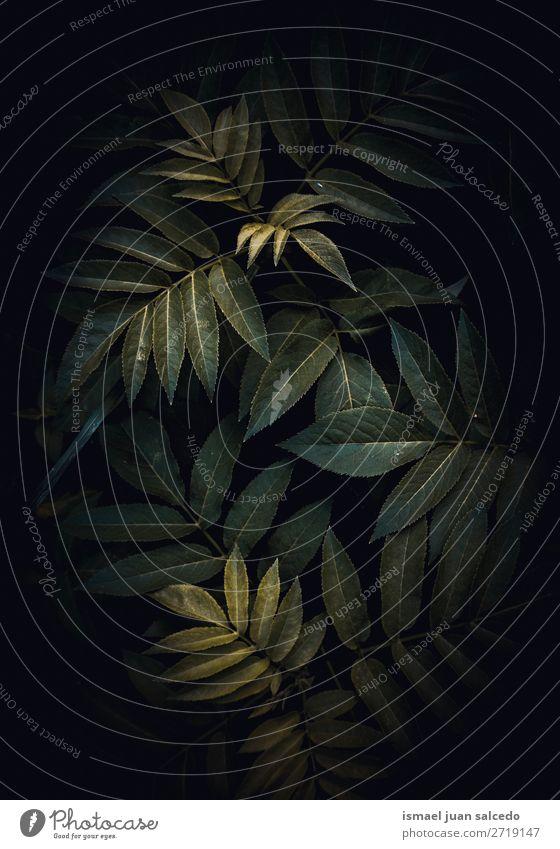 abstrakte grüne Pflanze Blätter Textur im Garten Blatt geblümt Natur Dekoration & Verzierung Konsistenz frisch Außenaufnahme Hintergrund Beautyfotografie