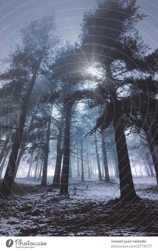 Ferien & Urlaub & Reisen Natur Landschaft Sonne Baum Erholung Wald Winter Berge u. Gebirge Herbst Schnee Platz Spanien Phantasie Ausflugsziel Bilbao