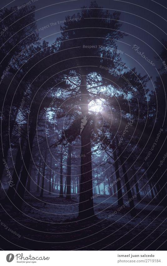 Sonnenuntergang und Schnee im Wald im Winter Baum Berge u. Gebirge Natur Landschaft Außenaufnahme Ferien & Urlaub & Reisen Platz Ausflugsziel Herbst fallen