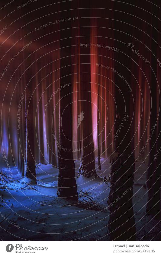 Sonnenuntergang und Schnee im Wald Baum Winter Berge u. Gebirge Natur Landschaft Außenaufnahme Ferien & Urlaub & Reisen Platz Ausflugsziel Herbst fallen