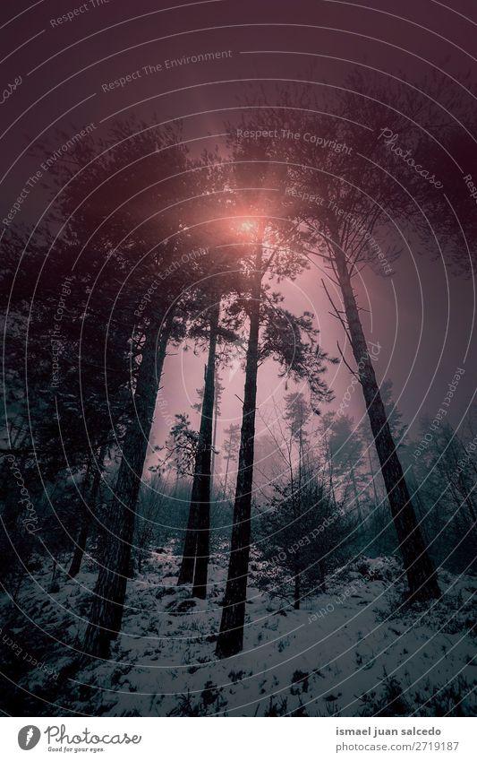 Schnee und Sonnenuntergang im Wald Baum Winter Berge u. Gebirge Natur Landschaft Außenaufnahme Ferien & Urlaub & Reisen Platz Ausflugsziel Herbst fallen