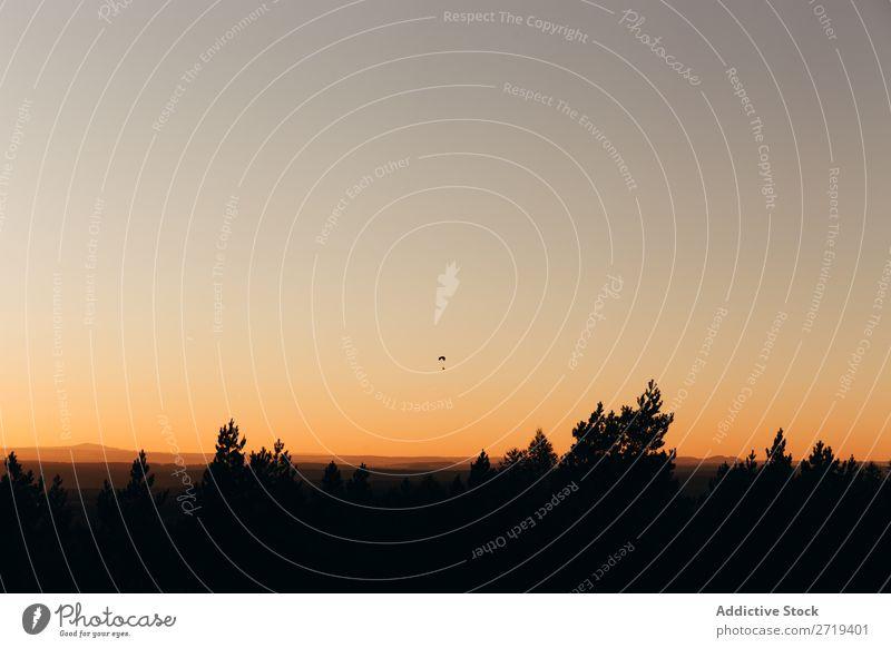Schwarze Silhouette der Bäume im Sonnenuntergang Landschaft Gelände Natur Fallschirmspringen Etage Horizont Sonnenlicht Inspiration Aussicht ruhig Umwelt