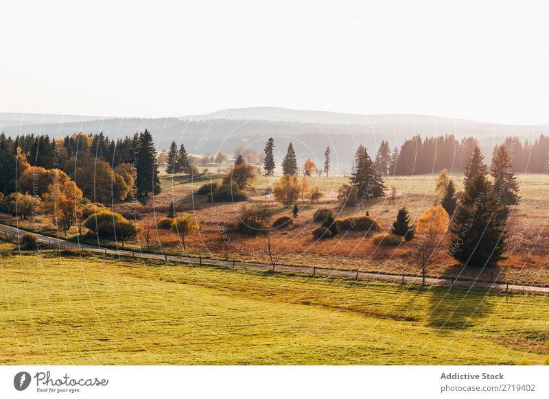 Grasland im hellen Morgenlicht Landschaft Gelände ruhig Freiheit Aussicht natürlich Feld Umwelt Fahrbahn Tal Baum Dunst Abenteuer Farbe Szene Wald Länder