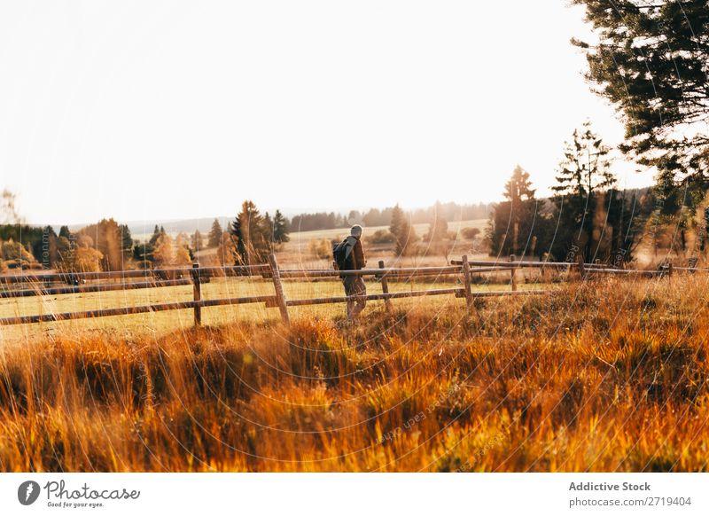 Reisender in goldenen Feldern Landschaft Gelände Länder abgelegen Freiheit Umwelt Tal Erkundung Baum Aussicht Abenteuer Szene mehrfarbig Wildnis Tourismus