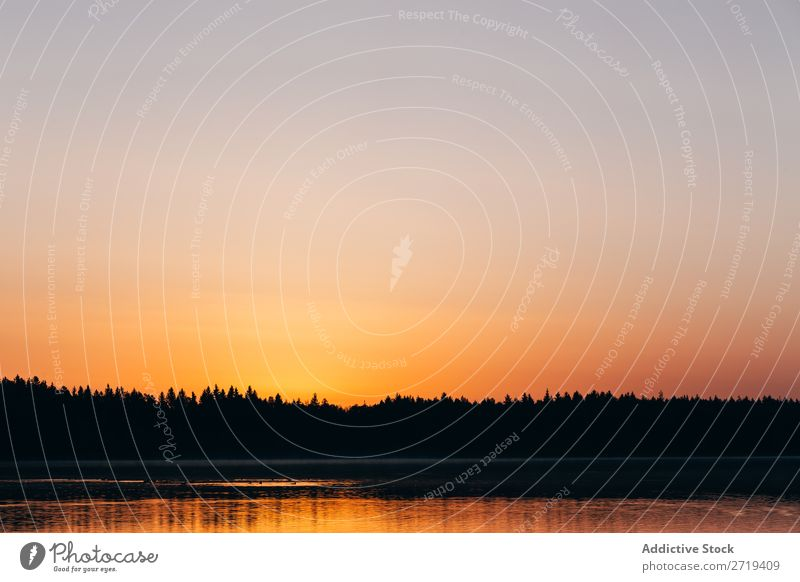 Goldener Sonnenuntergang über dem ruhigen See dunkel Silhouette Reflexion & Spiegelung Oberfläche romantisch Natur Jahreszeiten Landschaft Beautyfotografie