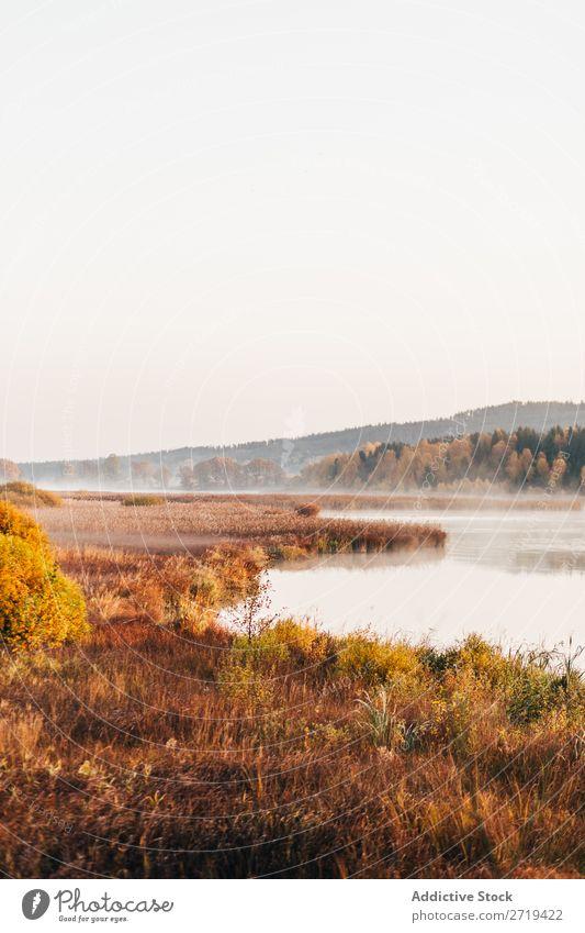 Morgendliche Nebelschwaden über dem See Landschaft Herbst Dunst Stille ruhig Tourismus wunderbar Natur Beautyfotografie Sonnenlicht Außenaufnahme Seeufer