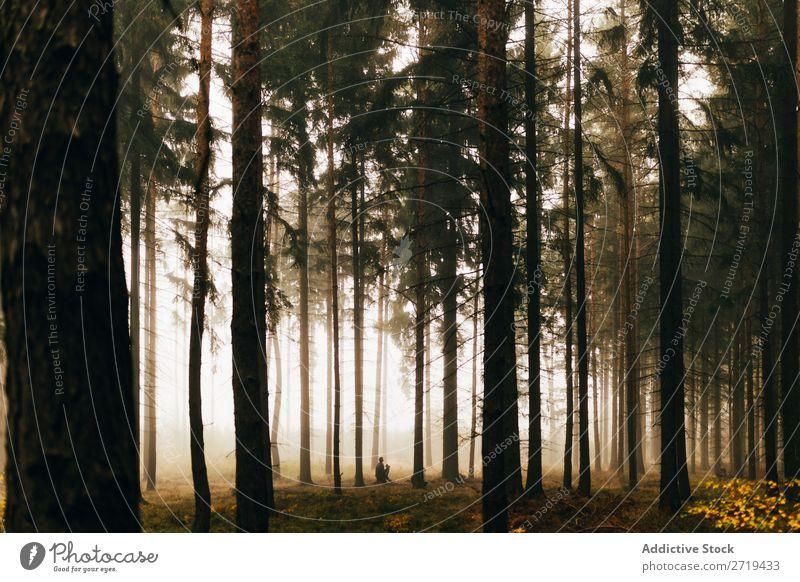 Reisender in dunklen, nebligen Wäldern Wald geheimnisvoll Landschaft spukhaft Hintergrundbild Nebel Natur