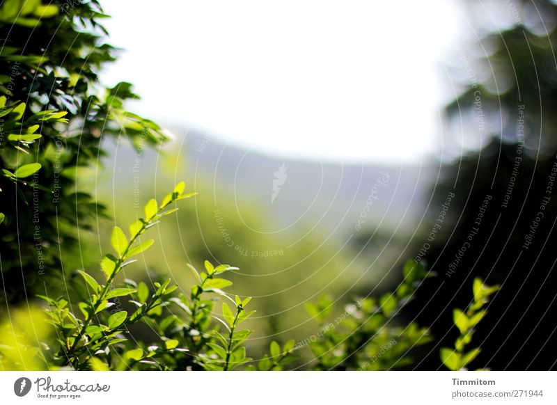 Loslassen Himmel Natur grün Pflanze Blatt ruhig Umwelt Gefühle Frühling grau träumen Zufriedenheit Wachstum ästhetisch Sträucher Freundlichkeit