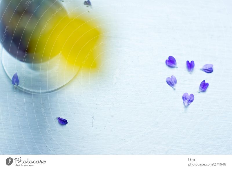 gefallene Herzen Blüte Grünpflanze Wildpflanze Zeichen Blühend verblüht Glück Frühlingsgefühle Liebe Romantik Verfall Vergänglichkeit herzlich Vase Trauer